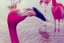 13. Pink Chicken / by Sam ♥