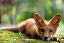 Super cute animals / by Ginger Ward Pruitt