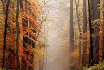 Autumn / by Aurore S.