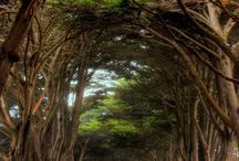 Ship to Shore / by Point Reyes National Seashore Association
