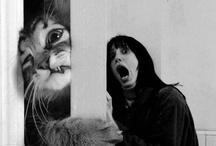 Animals / by Veronica Yr