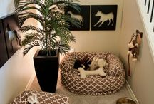 Dogs need cool space too / by Erika Parisi