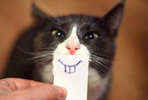 Make me smile :) / by Shanna Stefan