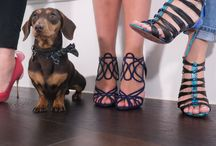 #SERGIOSHOEHUNTER / Sergio the Shoe Hunter is on the ground, sniffing out the most fashionable footwear! #SergioShoeHunter / by THE OUTNET.COM