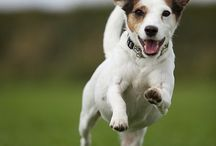 Happy Jacks and Other Fabulous Canines / by Theresa Davies