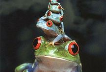 Frogs & Toads / I <3 Frogs & Toads! / by Gillian Taylor
