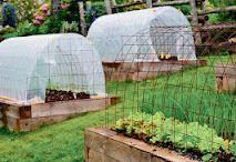 Veggie garden / Organic vegetable garden / by Nelia Blumrick