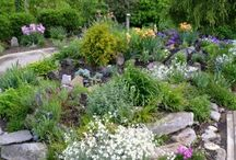 Rock Gardens / Plants, projects and ideas that fit rock or alpine gardens. / by Horticulture Magazine