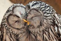 Owls / by Justine Ruiz Mendoza