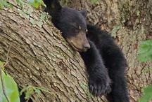 SmokeyMountain Black Bears  / by Cheryl Smith Reiter