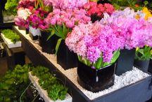 Flower Shops Ideas / by Carmen Cusmano