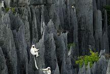 Madagascar / by Stephanie Kwong