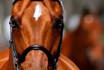 Equestrian / by Lexy Snyder