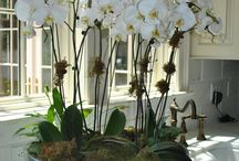 Orchids / by Mayra Puchades