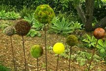 Plants & Flowers / by Alicia Calhoun-Mackes