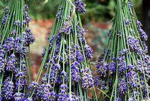 Herbs / by Katrina Kincaid