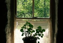 home and garden / gardening, plants, greenery, how to, backyard plots, window sill gardens, potted plants, hints and tips, beautiful gardens, suggestions and wishes. / by Rowena Murillo