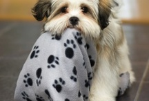 Breed of the Week / Featured dog and cat breeds / by Breed Trust