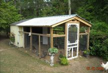 Chicken Coop / by Tammy Ezell
