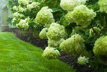 Gardens. / by Janice Lassiter