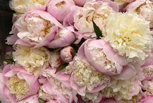 Flowers ; / by Sheila Smith