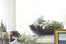 INDOOR PLANTS / by Tevis Houston