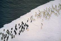 penguins / by Alison Shaffer (kitchentable4.com)