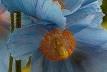 Floral.... / by Lisa Luera     (lisa Padovan)