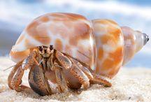 Hermit de Crab / by Rebecca Guyton