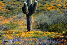 Living in arizona / by Cindy Rodriguez