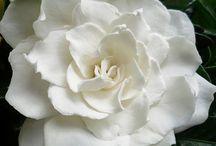 Flowers / by Brenda Trimble