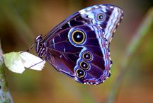 Flutterby / by Dawn Phillips Williams