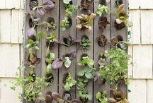 Gardening / by Amanda Troxel