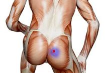 exercise sciatica / by Joe Seed