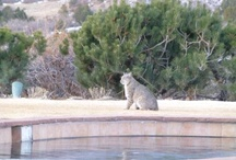 Local Wildlife / by Garden of the Gods Club and Resort
