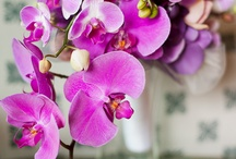 Orchids / by Aronia C.