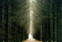 woods / by Kelly Peeler