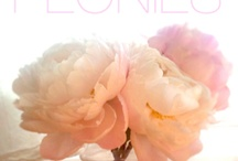 Flowers / by Teresa Presto