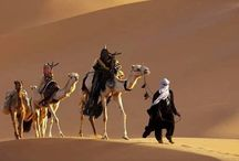 Camels / by Julie-Ann Neywick