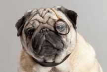 The Pug / by Southern Belle Charm