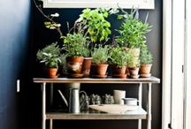 Terrarium / Indoor Planting, Floral and Gardening Ideas / by Rebecca Vogel Pitts
