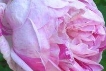 BEAUTIFUL  GARDENS / Flowers, beautiful gardens, fountains... / by Annette Figueroa