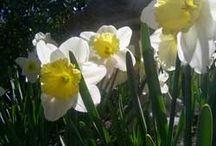 Gardening Calendar / When to do what in the garden! / by Horticulture Magazine