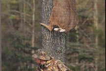 Hunting Fun / by Tanya Morrison