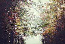 Fall is Fabulous / by Kaye Coleman