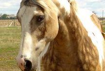 Equestria / by Erin Anderson