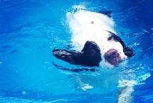 J'adore les animaux! / Mientras más conozco a la gente, más quiero a mi perra / by Maria Fernanda Ortega Gámez