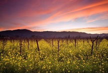 The Beautiful Napa Valley / This is our home! / by Honig Vineyard & Winery