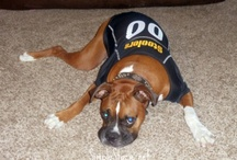 10 Dogs Who Clearly Don't Care About Sports / by SportsGrid