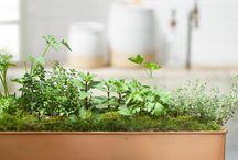 Plants / by Hillary Christensen